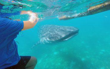 오슬롭 고래상어